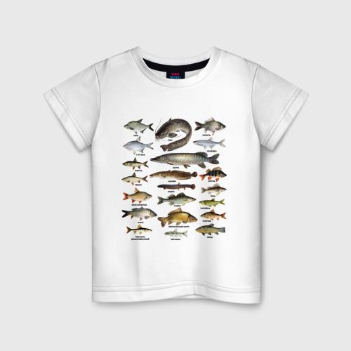 Детская футболка хлопок Популярные виды рыб