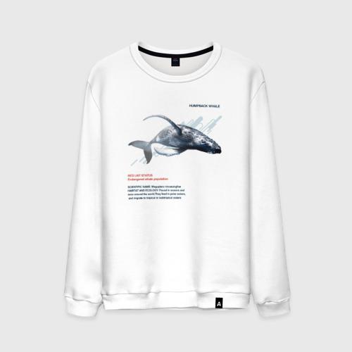 Мужской свитшот хлопок Hampback whale